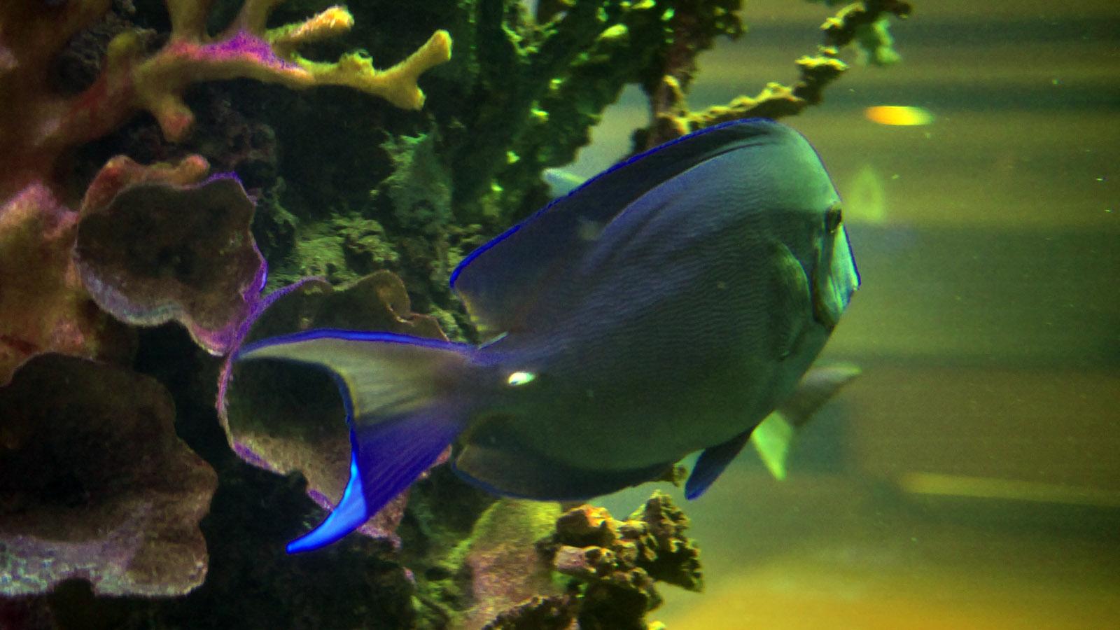 Entfernungsmesser Unter Wasser : Laser entfernungsmesser unter wasser m