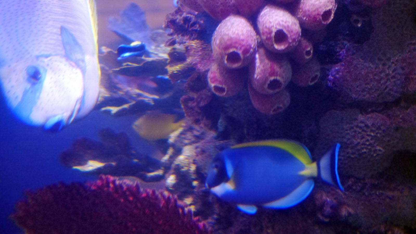 Laser Entfernungsmesser Unter Wasser : Unterwasser mikrofone